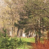 Весна природы и осень жизни :: Виталий