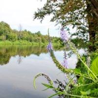 весна на реке :: Андрей Дружинин