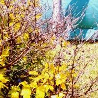 Зима-весна :: Вероника Озем