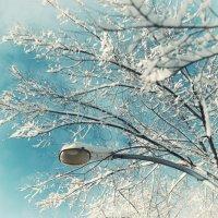 Снежность :: Evgenija Enot