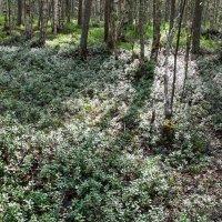 прогулка по лесу :: Светлана Ку