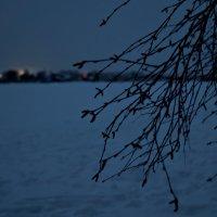 вечерняя тишь :: Валерия Воронова