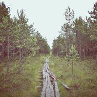 по дороге к Святому озеру :: виктория иванова
