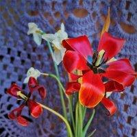 Ещё цветёт :: Сергей Чиняев