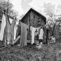 Стрекочут с утра две сороки-воровки, где сохнет бельё во дворе на верёвке :: Ирина Данилова