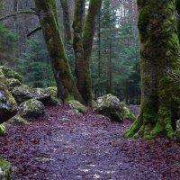 в темно-синем лесу... :: Elena Wymann