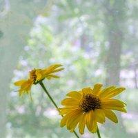 Цветы на окне :: Сергей Тарабара