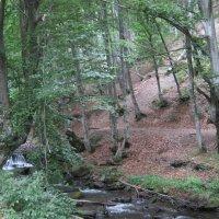 Леса и реки Карпат :: Ирина Диденко