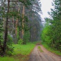 Росной дымкой утренний туман... :: Лесо-Вед (Баранов)