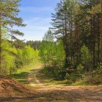 Прогулки на велосипеде :: Владимир Рязанов