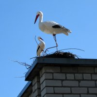 Аисты на крыше :: veera (veerra)