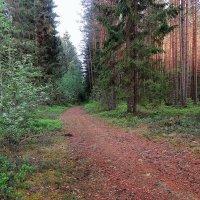 В весеннем лесу. :: Павлова Татьяна Павлова