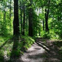 В лесу в конце весны :: Милешкин Владимир Алексеевич