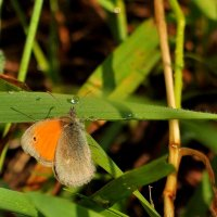 Водопой бабочки :: Albina