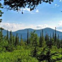 В горах Алатау :: Сергей Чиняев