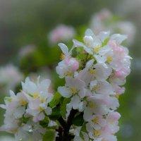 Весна :: Евгения Кирильченко