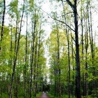В лесу :: Евгения К