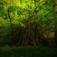 Шалаш в лесу :: Nina Yudicheva