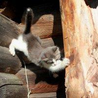 А прыгать-то страшно! :: Наталья Лунева