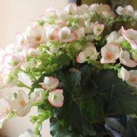 Цветы :: Евгения Коркунова