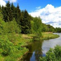 Природа Смоленщины в конце весны :: Милешкин Владимир Алексеевич