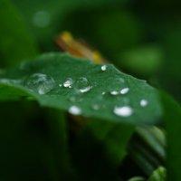 Дожди... :: Andy Bayt