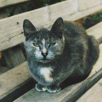 уличная кошка :: Валерия Беськаев