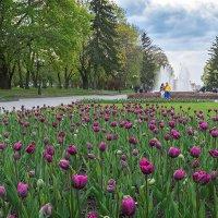 Весна по-черниговски. :: Андрий Майковский