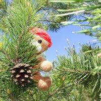 Мишка косолапый по лесу идет!.. :: Валентина ツ ღ✿ღ