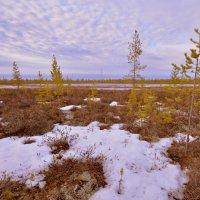Май на Ямале. :: Лариса Красноперова