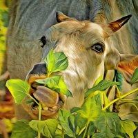 Священная корова :: Demian