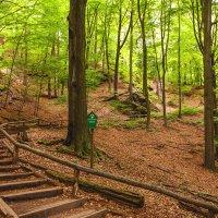 Лес возле Дрездена :: Юрий Мазоха