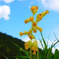 Живой цветок на фоне неба :: Сергей Беляев