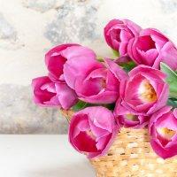 Тюльпаны :: Наталья Белик