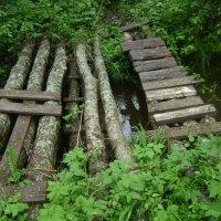 Через лесной ручей :: Марина Домосилецкая