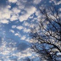 Вечернее небо :: Ольга Чистякова