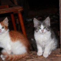 Выгляни в окошко, есть хотят котята... :: Наталья Лунева