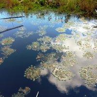 Узоры на воде :: Вера Щукина