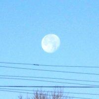 Луна и провода :: Дмитрий Никитин