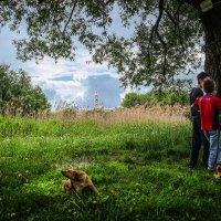 Под деревом. :: Александр Селезнев