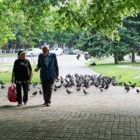 Любовь и голуби :: Андрей Майоров