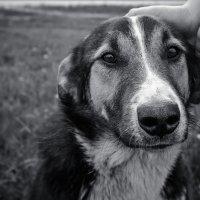 случайный пёс.... :: Евгений Осипов