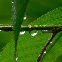 В дождь :: Дарья Fox