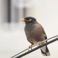 Птичка :: Фазлиддин Инагамов