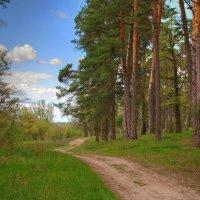 Дорога вдоль леса :: Константин