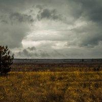 Поле :: Александр Громов