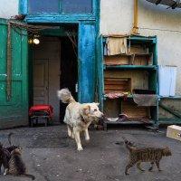 Суров, однако, комендант –  фундамент общежития! :: Ирина Данилова