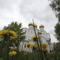 Золотые россыпи :: galina bronnikova