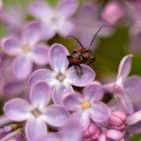 майские краски... #3 :: Андрей Вестмит