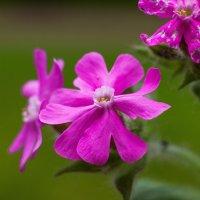 Майский цветок :: Виталий